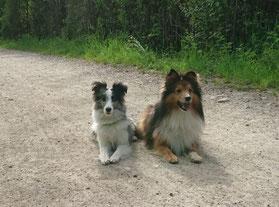 Niggs und Dandy