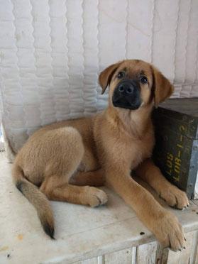 Kundenhunde Galerie Hundeschule Andrea Winkler Leverkusen Und