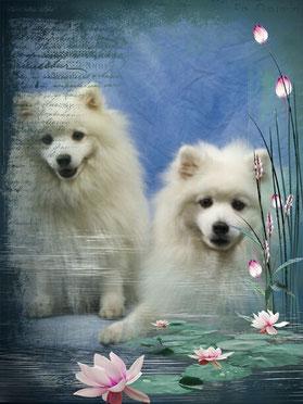 Avaro mit seinem Bruder Arames - Bailey