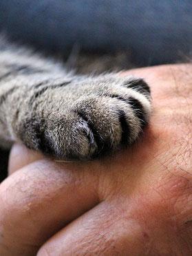 Katze beschäftigen fördert Bindung. Katzenpfote liegt auf einer Hand