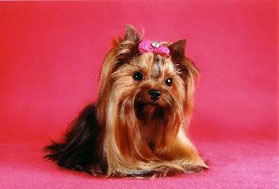 Pink Lady`s Famous Gipsy Queen