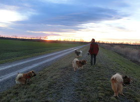 Bia, Ylvi, Ronja u. Mexx: Spaziergang, bevor´s losgeht