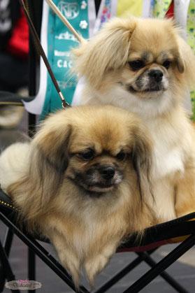 Jamy (BOS) en Lexie (BOB)