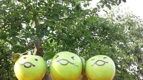 りんごなめこ