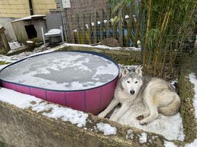 Eigentlich hätte ich nach dem Spazi gerne ein Bad genommen, aber da kann ich wohl lange warten. (Ice)