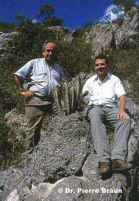 Pierrebraunia brauniorum, Minas Gerais/Brasil 26.08.1999