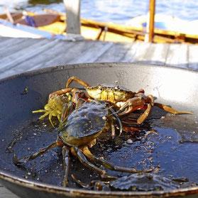 krabbe smerte koking krabbesuppe