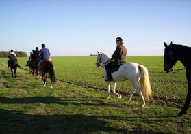 Centre équestre du Thieulin : La Licorne