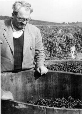 Weinlese Gaisberg