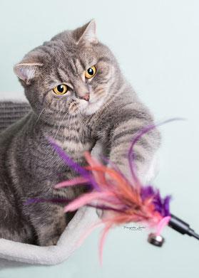 Franziska Spohn Fotografie - Tierfotografie, Katzenfotografie, Indoorshooting, spielende Katze auf Hängematte