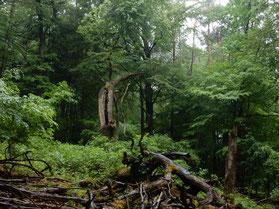 """Das Foto stammt von Christian Stierstorfer und zeigt eine kleine """"Wildnisinsel"""" in seinem eigenen Privatwald."""
