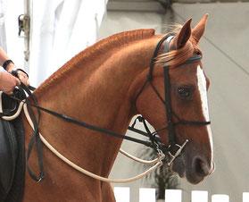 Grisbi, Equestria 2011