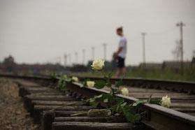 Weiße Rosen auf einem Bahngleis in Auschwitz