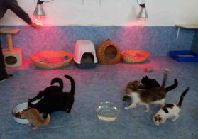 die neuen Wärmelampen im Katzenzimmer