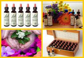 Esencias Florales Bach Herbolario Alquimista Arrecife Lanzarote