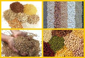 Legumbres Alimentación y Nutrición Herbolario Alquimista Arrecife Lanzarote