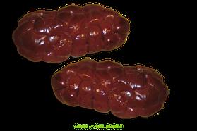 Nieren Rind Bio