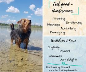 Hundesommer 2020, hundesommer tiertraining diamant, hundesommer salzburg, sommerkurse salzburg, massage hund, hundetraining, workshop hund, ernährung hund, futterberatung, salzburg, österreich, bayern, tiertraining diamant, equidao, seminar hund