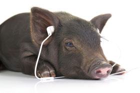 Das sollen nicht die Originale sein? Das hört doch kein Schwein!