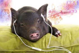 schweinegeile Mucke...