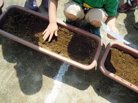 穴に種を入れたら土を平らにやさしくぽんぽん