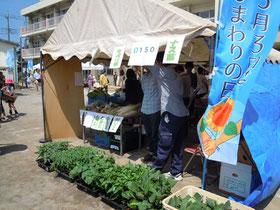 旬の新鮮野菜と野菜苗!