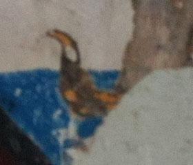 Détail griffe patte arrière gauche