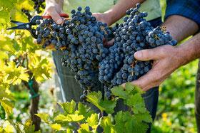 wassmann biodynamic natural wines