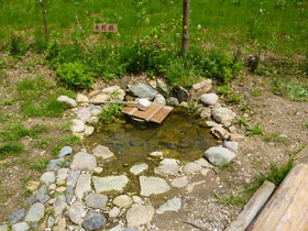 農園内湧き水(いつでも水遣りができます)
