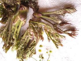 たけのこ山菜料理専門店美味しいたけのこ食べたい中津川市瀬戸の筍山菜レア物こしあぶらたらの芽こごみたかのつめはりぎり