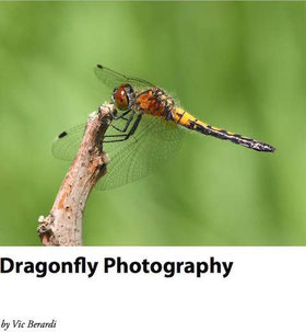 Cover of the dragonfly photography book.