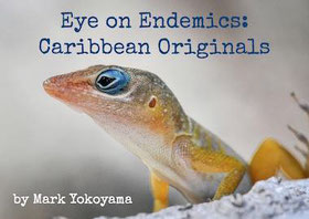 photo of endemics caribbean animals