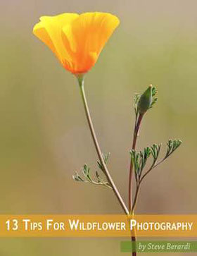 Cover of the ebook 13 tips for wildflower photography