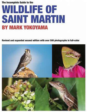 guide to wildlife of Saint Martin ebook