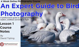 An expert guide to bird photography book