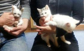 3匹の仔猫ちゃん
