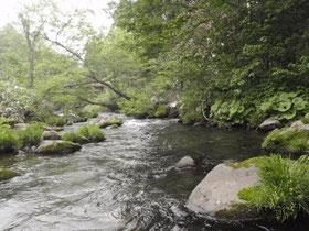 退渓点近くの流れ これでも川幅が広いところ