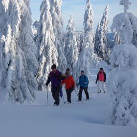 Geführte Schneeschuhtouren rund um Bodenmais im Bayerischen Wald, unsere Guides zeigen ihnen ihre wunderschöne Heimat mit der beeindruckenden Natur des Bayerischen Waldes, Schneeschuhgehen, Schneeschuhwanderung