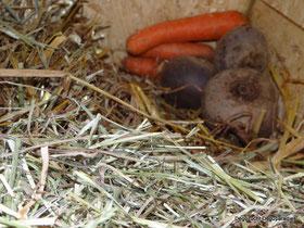 Karotte und Rote bete