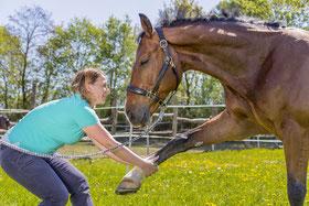 Dehnung Schultergliedmaße Pferd Chiro