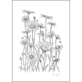 Les reines marguerites - 50X70 cm