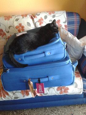 No, Bagheera no puede venir aunque se empeñe!