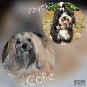 Eltern der Welpen sind Ahyoka & Coffe