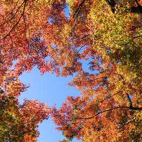 熊野妙法山阿彌陀寺の紅葉