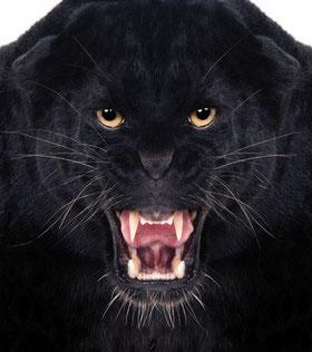 bete, noire, préparation, mentale, raphael, homat, angers, prépration, mental, stress, performance, émotions