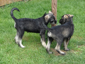 Hope (girl) and Henry (boy) - August 2014, Germany