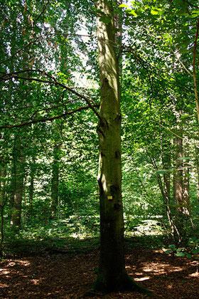 Baumbestattung, Waldfriedhof München