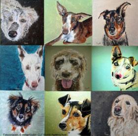 12 kleine Hundeporträts