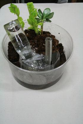 Modell der Funktionszusammenhänge: Füllrohr, Wasserzelle, Anzeigeflasche, Erde, Pflanzen. Überlauf fehlt im Modell.