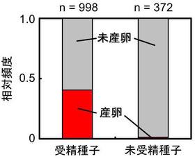 図1.野外における,モチノキの種子の受精と,モチノキタネオナガコバチによる寄生の関係.